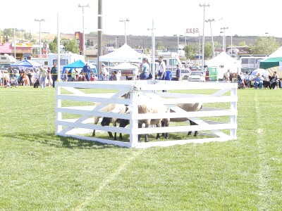2001 Calgary Highland Games 11