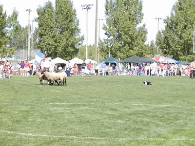 2001 Calgary Highland Games 08