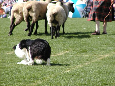 2001 Calgary Highland Games 06